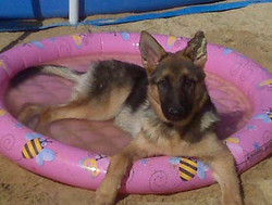 Jozie in her pool