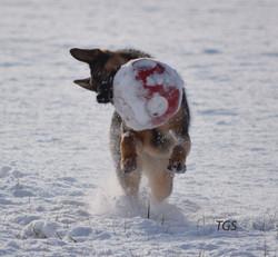 "Hemi with ""Jolly Ball"""