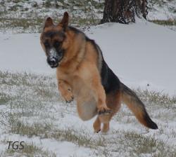 Axxie goofy in the snow