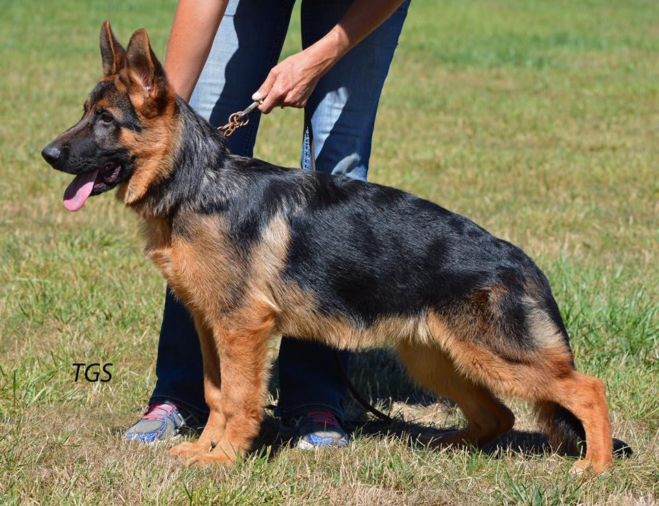 Kipp puppy stand
