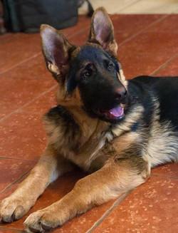 Diana puppy 2