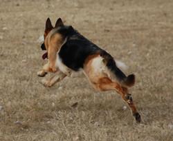 Jill run