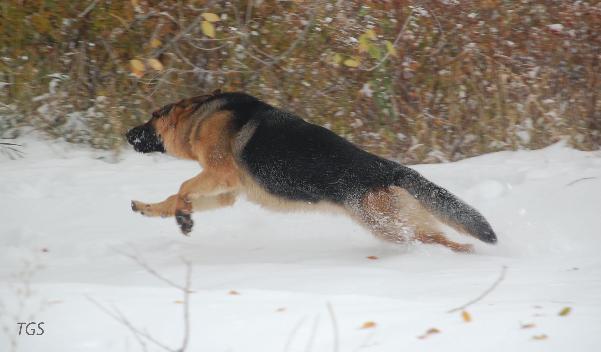 Axxie snow run
