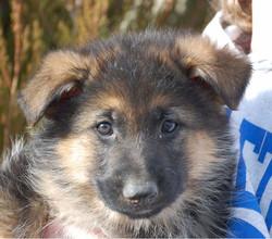 Myckk as a puppy