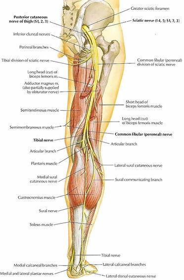 Dubbo Spine Centre Chiropractor Sciatica