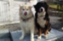 Hundebetreuung Lochenhof, Bonstetten