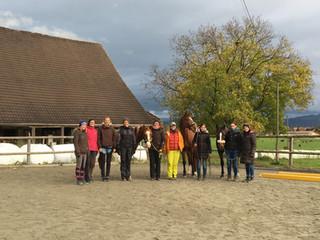 Kurs: dynamisches Pferdetraining