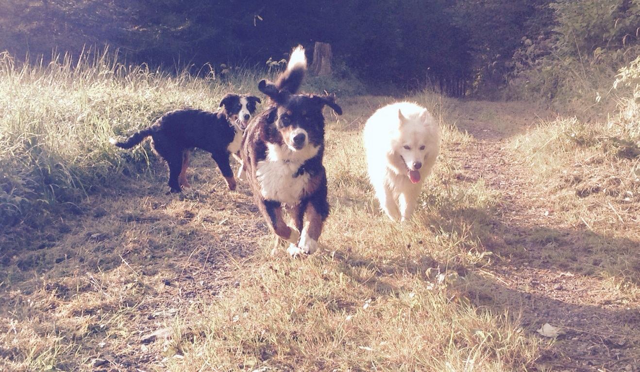 Westly, Oana und Suena