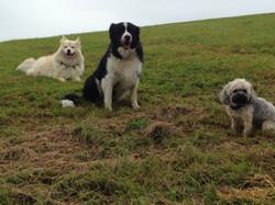 Suena, Leeroy und Ginger