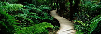 meditation green path.jpg