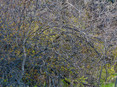 thicket II