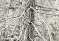 thicket XXII