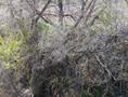 thicket XXVII