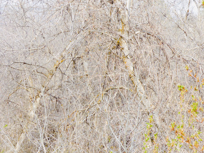 thicket VI