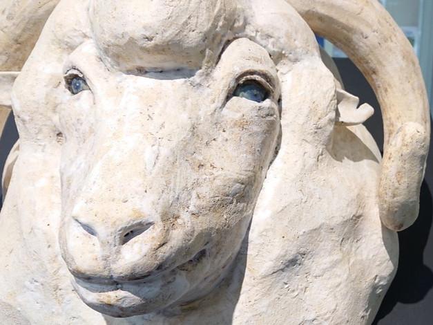 sheep merino relief