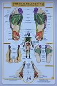 Reflexology Image, Wirral Reflexology, Wirral Penisula Reflexlogy