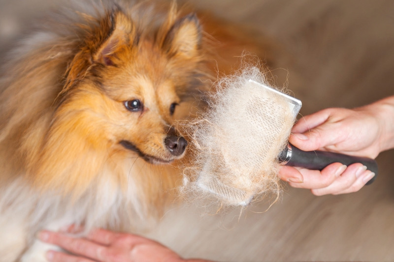 Dog Pet getting haircuts
