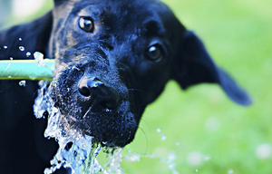 Pet Hydration