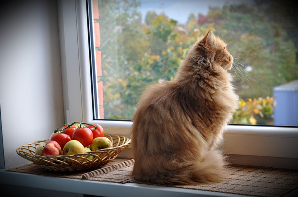 Cat indoors looking outside