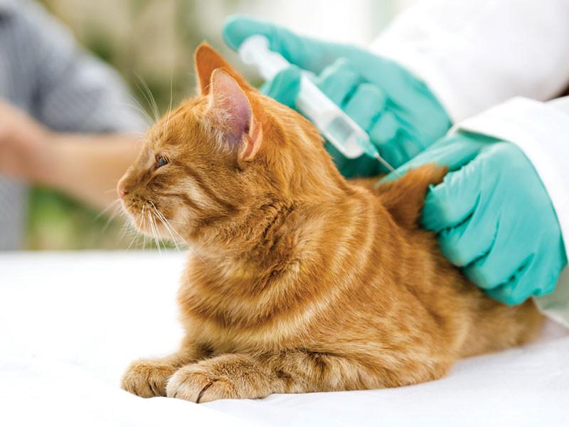 Pet at Vet to get Vaccines