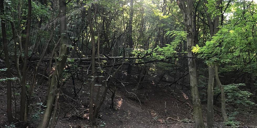 Aufstellungs-TAG im Wald