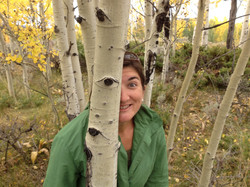 To be seen among the aspen