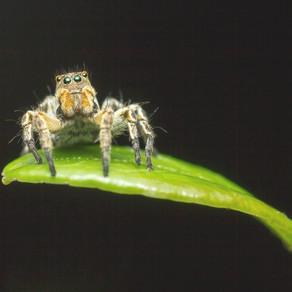 Journey to Little Green Spider