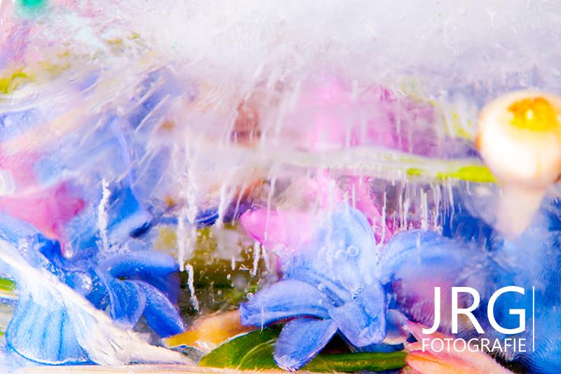 JRG Fotografie, Ijsbloemen