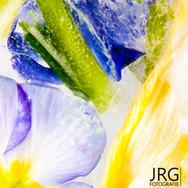 JRG Fotografie