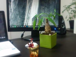 職場に緑は良い!