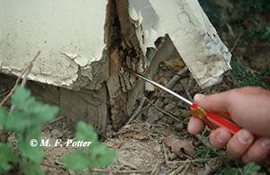 Protecting your Home Against Termites
