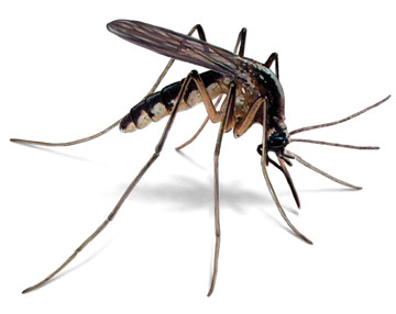 Mosquito control: Ways to prevent mosquitoes from biting