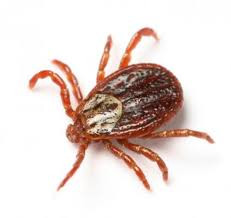 Active tick season expected in Ohio, officials warn about diseases