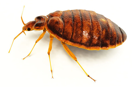 """Limitations of Home Insect Foggers (""""Bug Bombs"""")"""