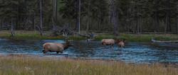 elk_river_nicholas-koenig