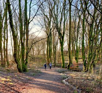 Parkhill Woods