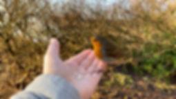 Friendly Robin-2.jpg
