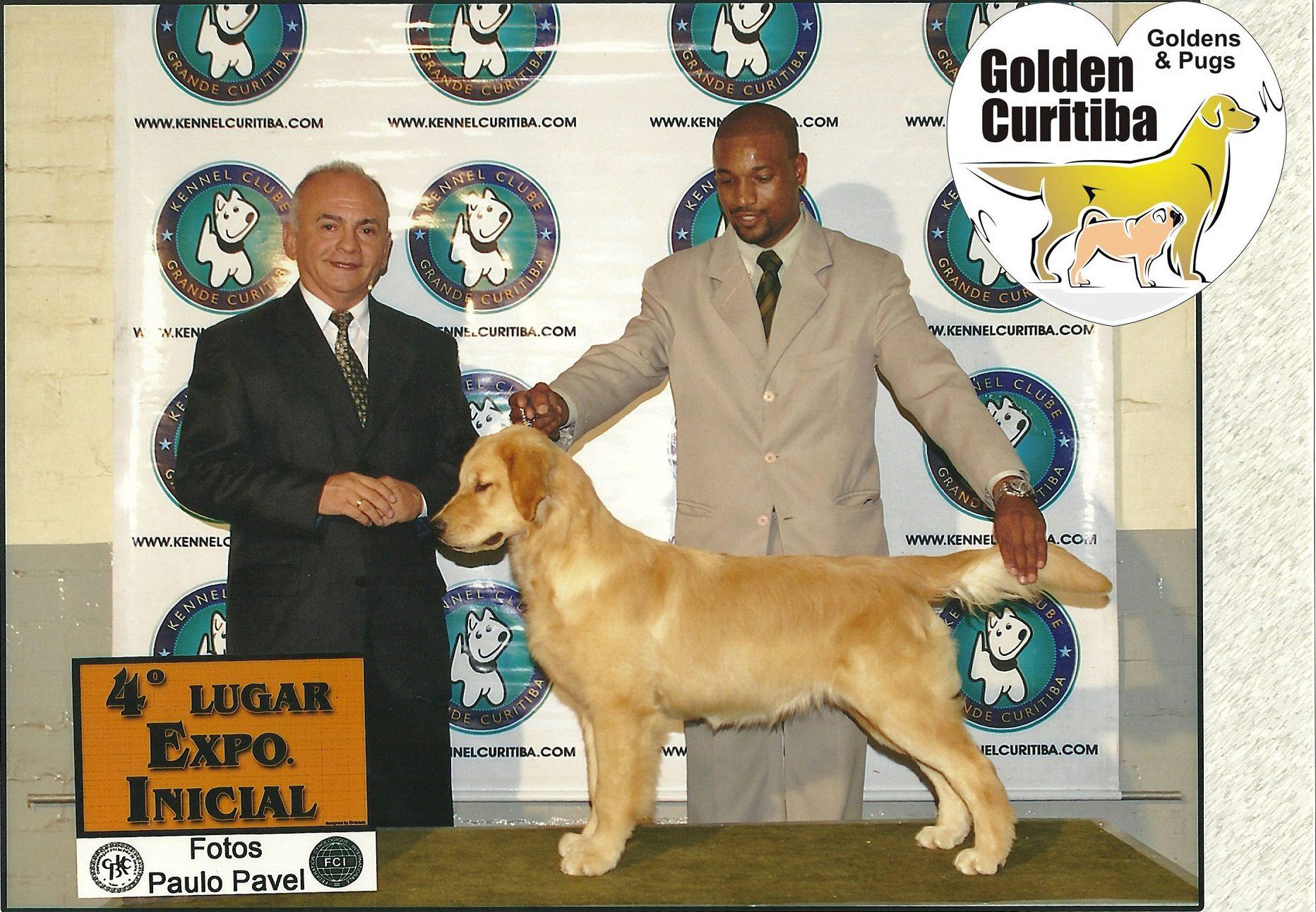 golden-retriever