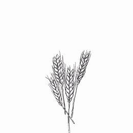 blé bio Moulin Des Etangs farine Ardenne