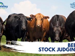 Beef Stock Judging Heats 2021