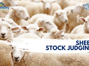 Sheep Stock Judging Finals 2021