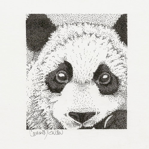 113 Panda Peekaboo 8x10 ink