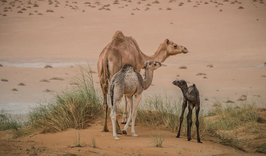 Hors piste Mauritanire - P1-4.jpg