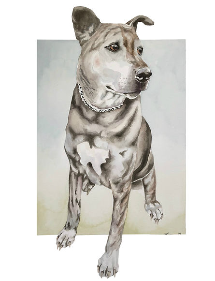 DogFin.jpg