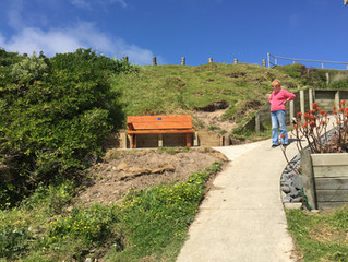 A New Seat for the Titahi Bay Beach