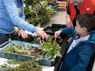 Succulents for Easter at Bunnings