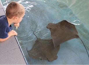 kid-feeds-rays.jpg