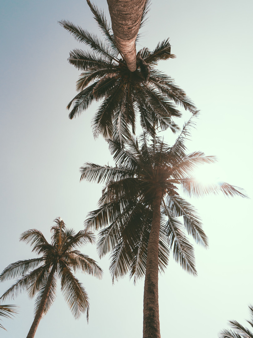 background-beautiful-environment-1122414