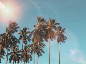 coconut-dawn-daylight-1152359.jpg