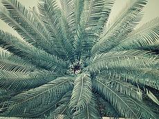 abstract-environment-flora-926641.jpg